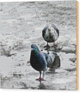 Doves On The Street Wood Print