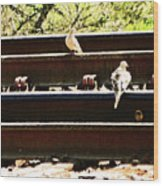 Doves On The Tracks Wood Print