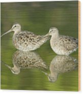 Dowitcher Reflections Wood Print