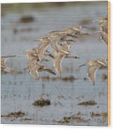 Dowitchers Wood Print