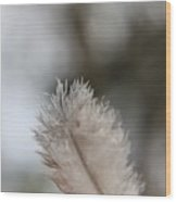 Down Feather Wood Print