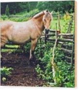 Down On The Farm Wood Print by Elizabeth Hoskinson