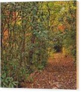Down The Mountain Path Wood Print