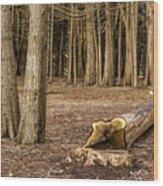 Down Tree Wood Print