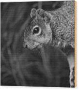 Downward Facing Squirrel Wood Print
