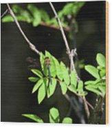 Downy Emerald Wood Print