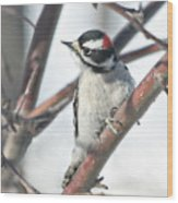 Downy Woodpecker In An Apple Tree Wood Print