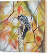 Downy Woodpecker In Autumn Forest Wood Print