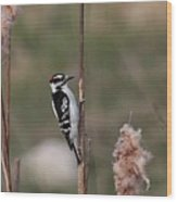 Downy Woodpecker On Cattails Wood Print