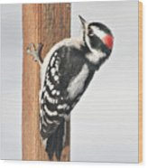 Downy Woodpecker On The Deck Post Wood Print