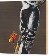 Downy Woodpecker On Tree Branch Wood Print