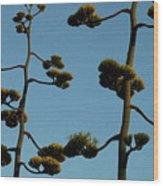 Dr Seuss Plant Wood Print