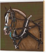 Draft Horse Wood Print
