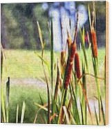 Dragon Fly And Cattails In Watercolor Wood Print