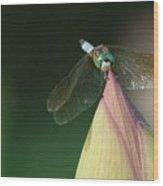 Dragon Fly Lotus Wood Print