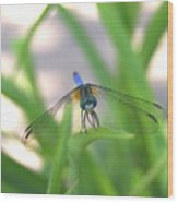 Dragon Fly Personality Wood Print by Debbie May