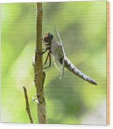 Dragonfly Slow Dance Wood Print