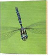 Dragonfly #1 Wood Print