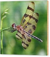 Dragonfly 10 Wood Print