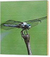 Dragonfly 14 Wood Print