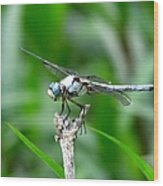 Dragonfly 15 Wood Print