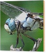 Dragonfly 16 Wood Print