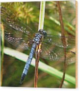 Dragonfly 6 Wood Print