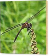 Dragonfly 7 Wood Print