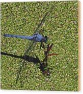 Dragonfly 73 Wood Print