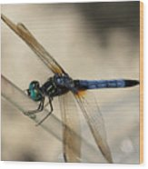 Dragonfly Abstract Wood Print