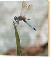 Dragonfly At Cypress Gardens Wood Print