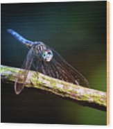 Dragonfly Beauty Wood Print