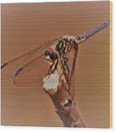 Dragonfly Beauty Wood Print