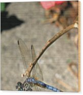 Dragonfly Black-tailed Skimmer Wood Print