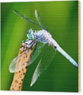 Dragonfly Blue Wood Print