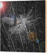 Dragonfly Wood Print