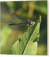 Dragonfly Called Funny Face Wood Print