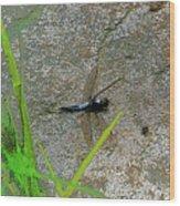 Dragonfly A Wood Print