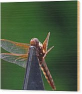 Dragonfly Cling Wood Print