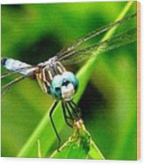Dragonfly Close Up 2 Wood Print