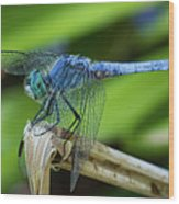 Dragonfly Color Wood Print