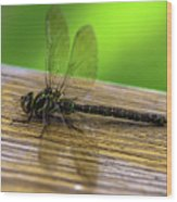 Dragonfly Colors Wood Print