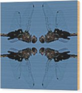 Dragonfly Composite Color Wood Print