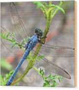 Dragonfly Delight Wood Print