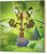 Dragonfly Design Wood Print