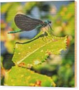 Dragonfly Dragonfly  Wood Print