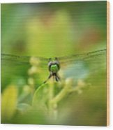 Dragonfly Dream In Green Wood Print