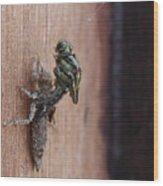Dragonfly Ecdysis Wood Print