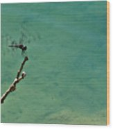 Dragonfly Exercising Wings Wood Print