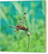 Dragonfly Hanging On Wood Print